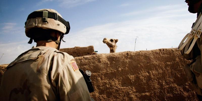 christoph bangert hello camel