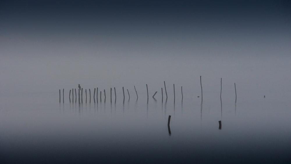 Massaciuccoli, piena del lago / marzo 2009
